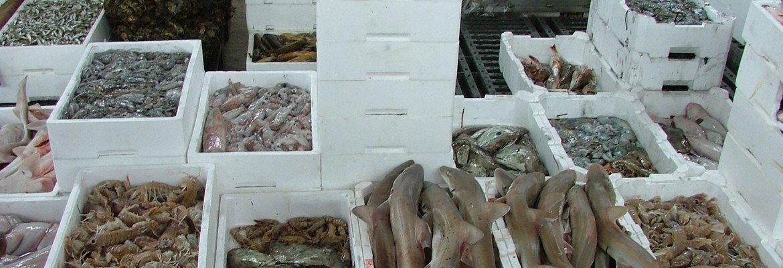 Chioggia e Sottomarina (Ve), dove mangiare del buon pesce